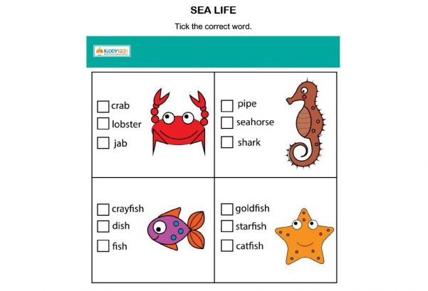 LANGUAGE - Sea life