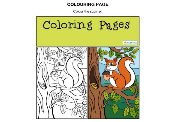 ART - Colouring Page Squirrel
