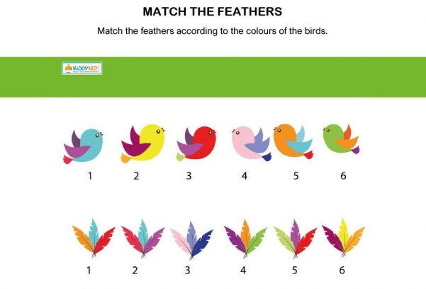 Logic & Puzzles - Match the Feathers Birds