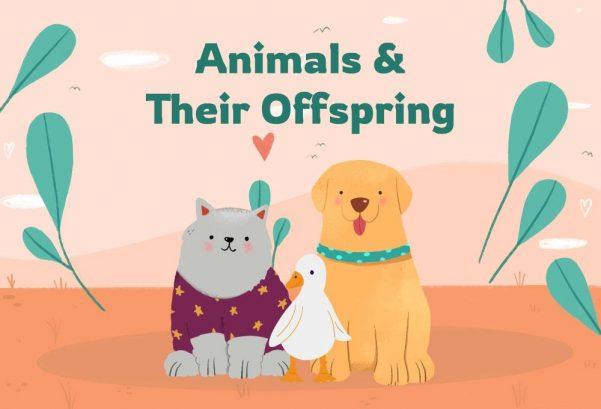 Animals & Their Offspring