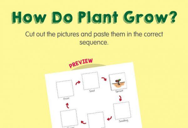 Science - How do plants grow?
