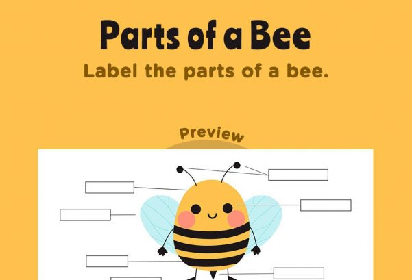 Science - Parts of a bee