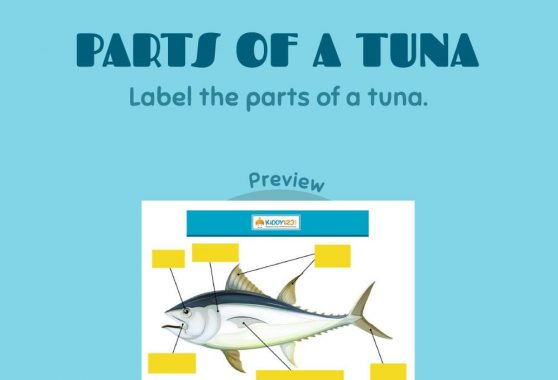 Science - Parts of a tuna