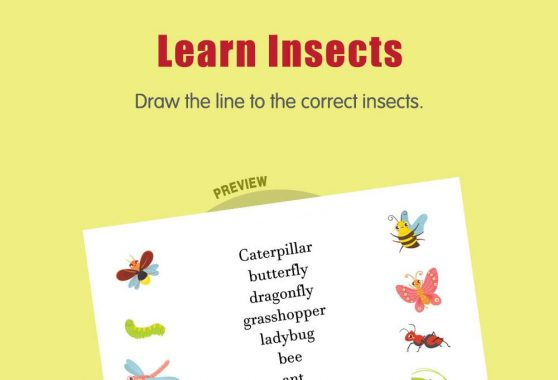 Science - Learn Insects