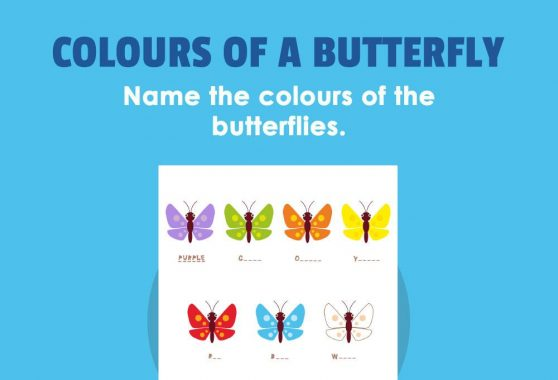 Art - Colours of a Butterfly
