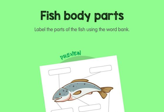 Science - Fish Body Parts